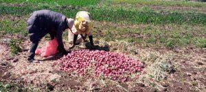 Superyali harvest
